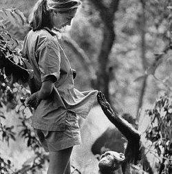 Viviendo entre simios (y III): Jane Goodall