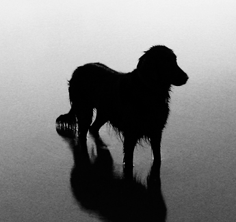 ¿Cuánto vale la vida de un animal?: «Personality goes a long way»