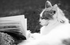 Tres lecturas sobre gatos para amantes de los mismos
