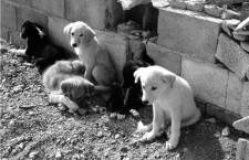 Los perros que nadie quiere y todos obvian