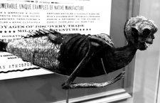 Breve historia del comérsela doblada (y II)
