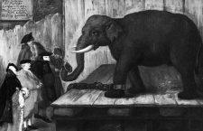 Elefantiada veneciana